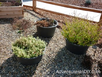 Irrigated Container Garden