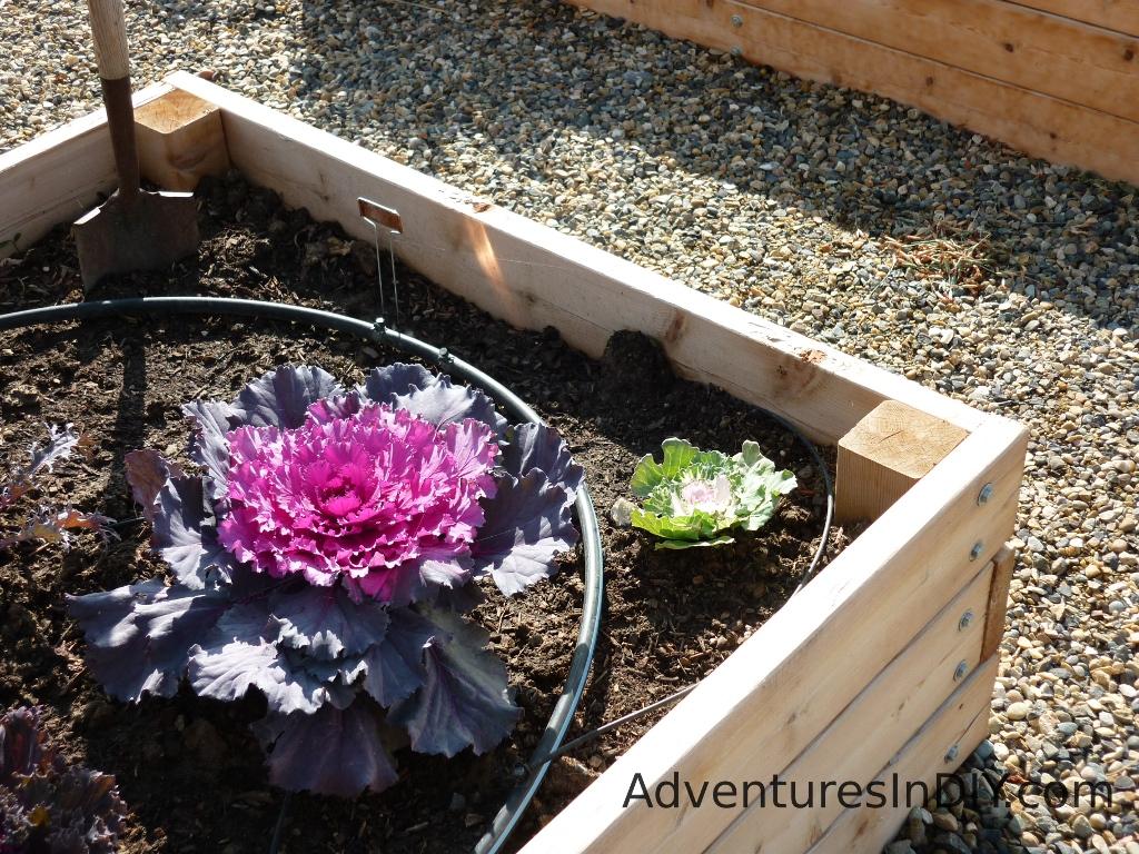 Raised Bed Gardening Ideas Adventures In Diy