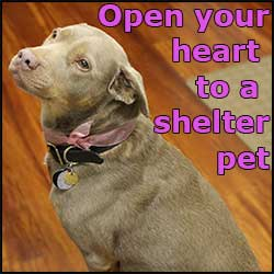 Help shelter pets by supporting the ASPCA