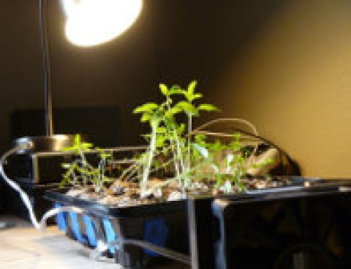 Make a Cheap Grow Lamp from Stuff You Already Have